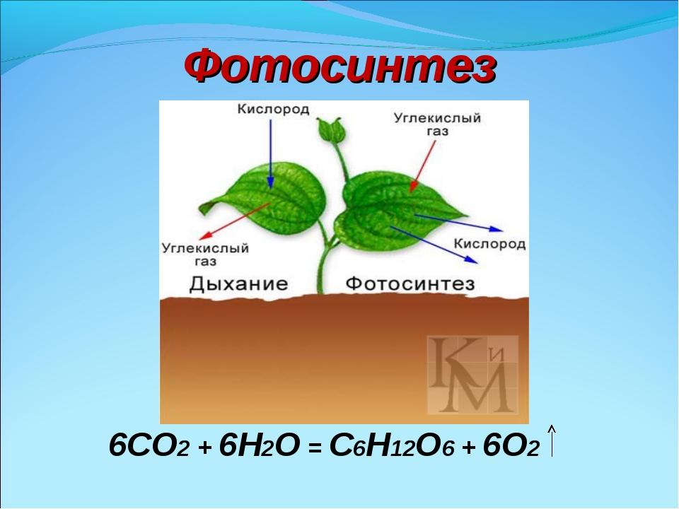 Фотосинтез 6CO2 + 6H2O = C6H12O6 + 6O2