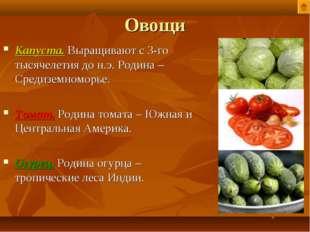 Овощи Капуста. Выращивают с 3-го тысячелетия до н.э. Родина – Средиземноморье