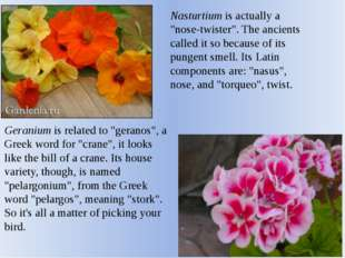 "Nasturtium is actually a ""nose-twister"". The ancients called it so because of"