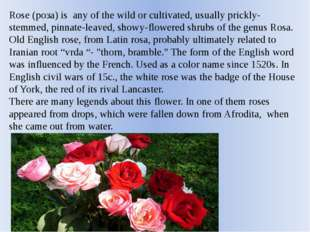 Rose (роза) is any of the wild or cultivated, usually prickly-stemmed, pinnat