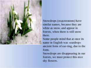 Snowdrops (подснежник) have similar names, because they are white as snow, an