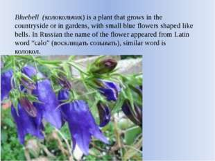Bluebell (колокольчик) is a plant that grows in the countryside or in gardens