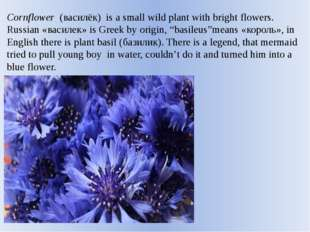 Cornflower  (василёк) is a small wild plant with bright flowers. Russian «вас