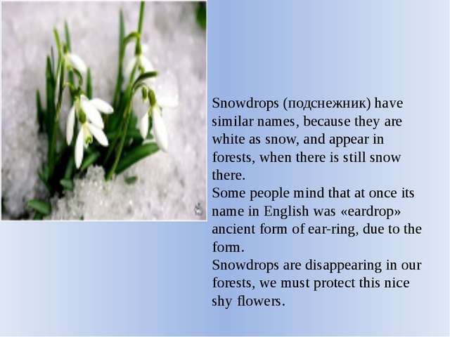 Snowdrops (подснежник) have similar names, because they are white as snow, an...