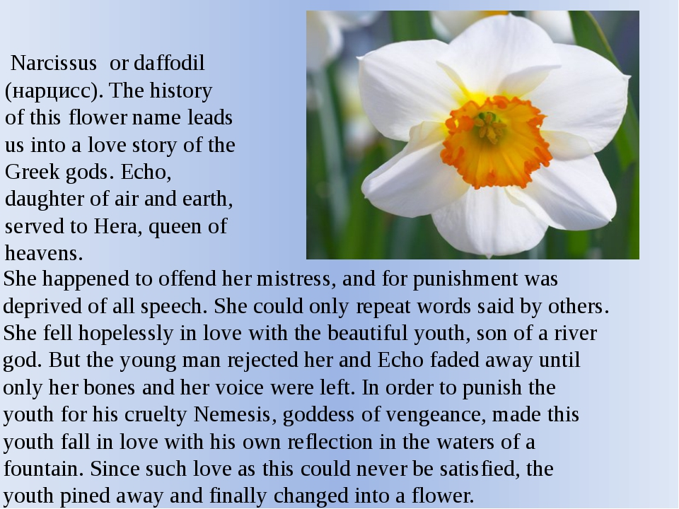 Narcissus or daffodil (нарцисс). The history of this flower name leads us in...