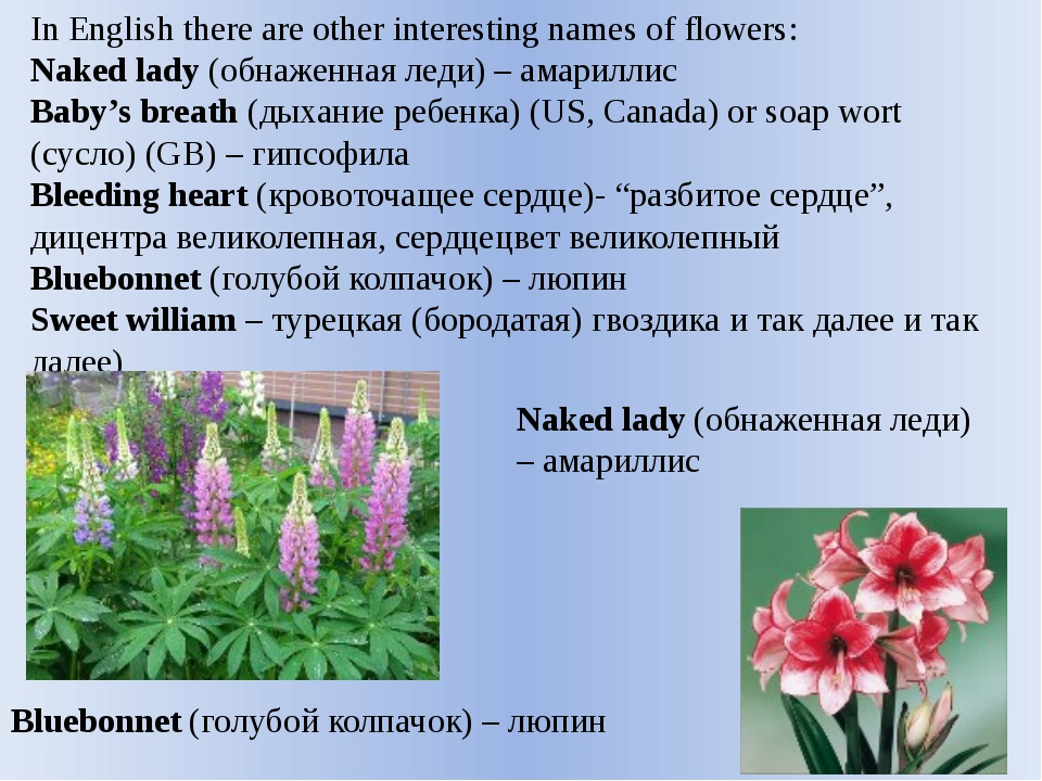 In English there are other interesting names of flowers: Naked lady (обнаженн...