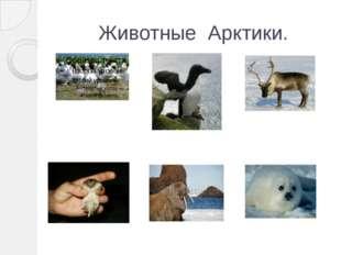 Животные Арктики.
