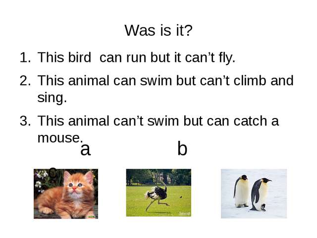 Was is it? This bird can run but it can't fly. This animal can swim but can't...