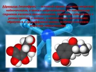 Адреналин (эпинефрин) — основной гормон мозгового вещества надпочечников, а т