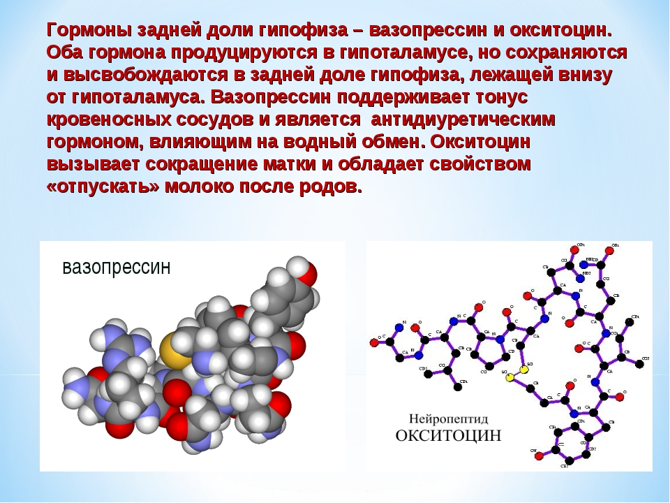 вазопрессин Гормоны задней доли гипофиза – вазопрессин и окситоцин. Оба гормо...