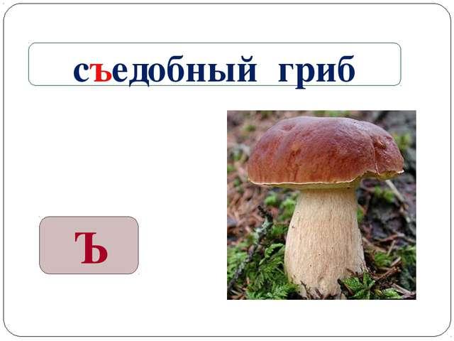 Ъ съедобный гриб
