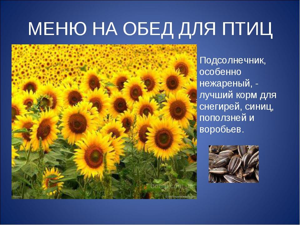 МЕНЮ НА ОБЕД ДЛЯ ПТИЦ Подсолнечник, особенно нежареный, - лучший корм для сне...