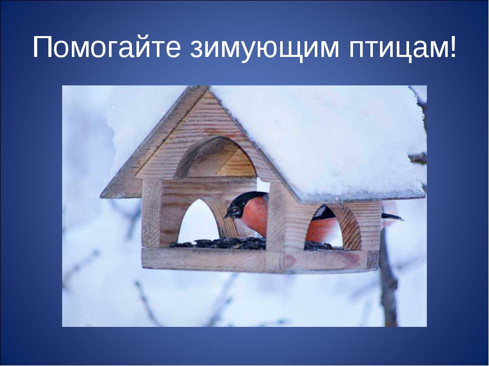 Помогайте зимующим птицам!
