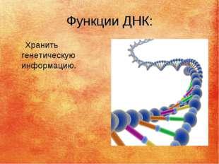 Функции ДНК: Хранить генетическую информацию.