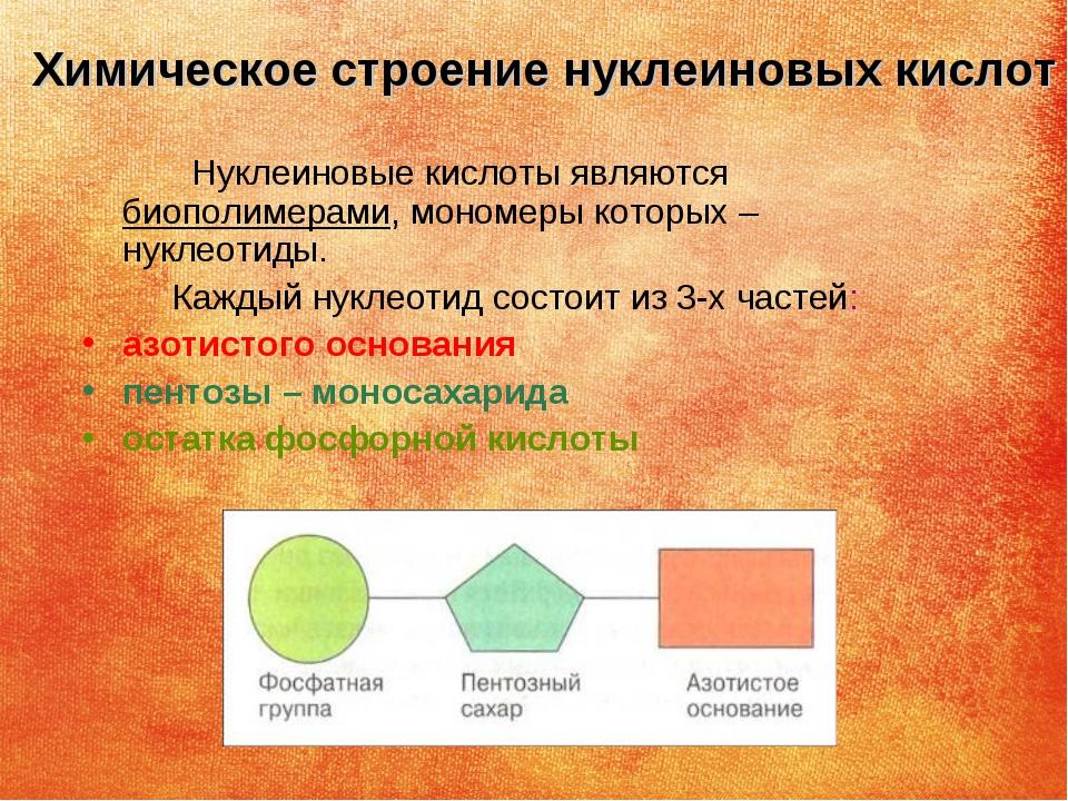 Химическое строение нуклеиновых кислот Нуклеиновые кислоты являются биополиме...