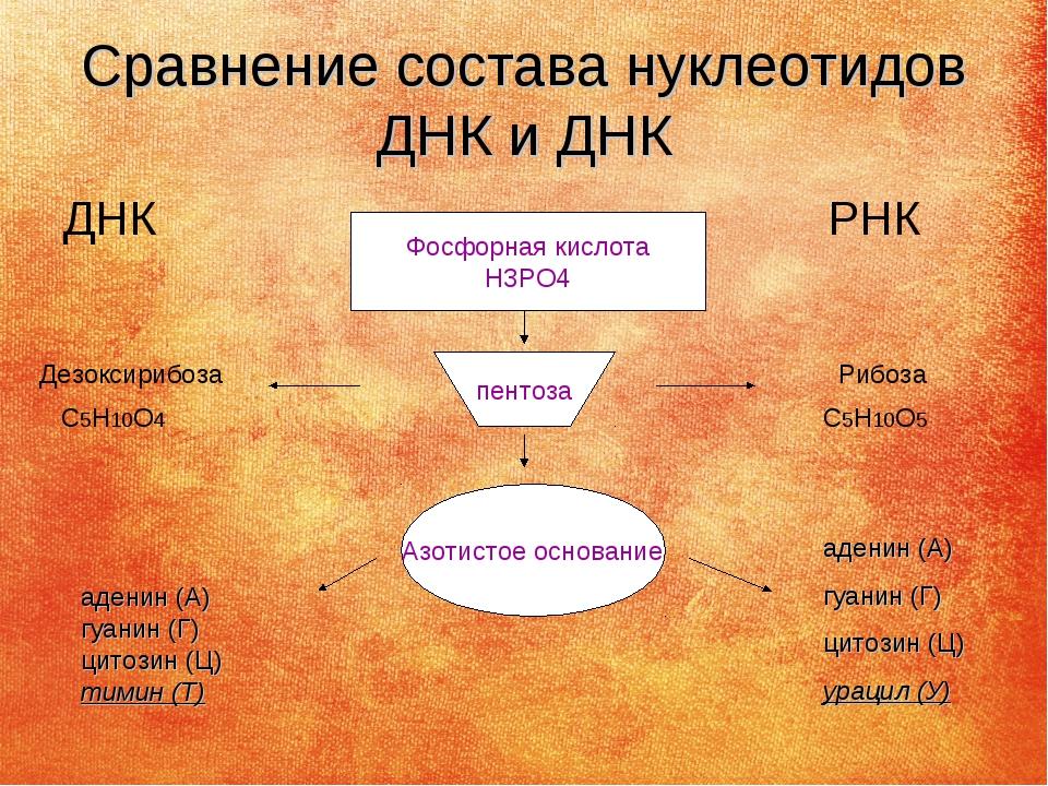 Сравнение состава нуклеотидов ДНК и ДНК ДНК РНК Фосфорная кислота Н3РО4 пенто...
