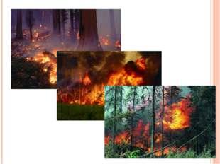 Существенно загрязняют атмосферу крупные лесные пожары. Чаще в итоге они выхо