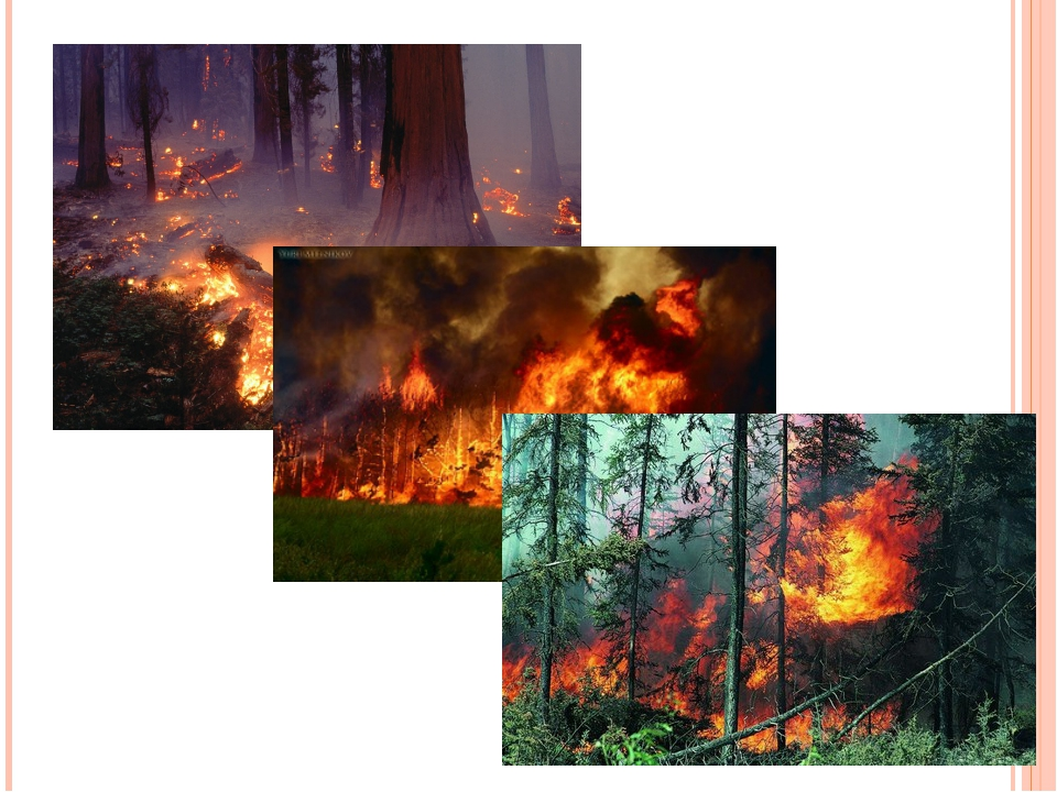 Существенно загрязняют атмосферу крупные лесные пожары. Чаще в итоге они выхо...