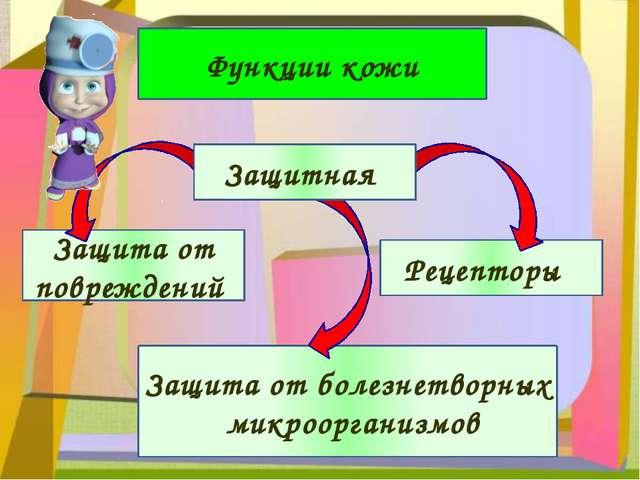 Функции кожи Защита от повреждений Рецепторы Защита от болезнетворных микроо...