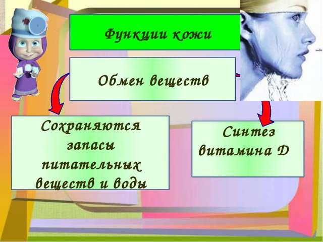 Функции кожи Сохраняются запасы питательных веществ и воды Синтез витамина D...