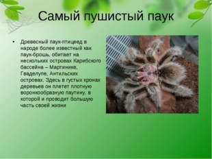 Самый пушистый паук Древесный паук-птицеед в народе более известный как паук-