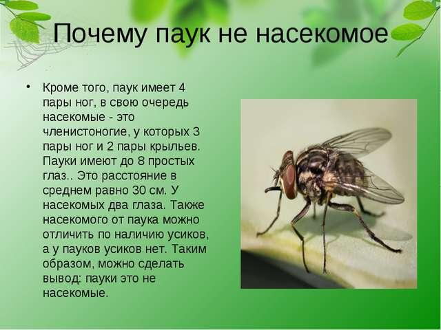 Почему паук не насекомое Кроме того, паук имеет 4 пары ног, в свою очередь на...