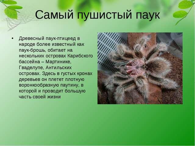 Самый пушистый паук Древесный паук-птицеед в народе более известный как паук-...