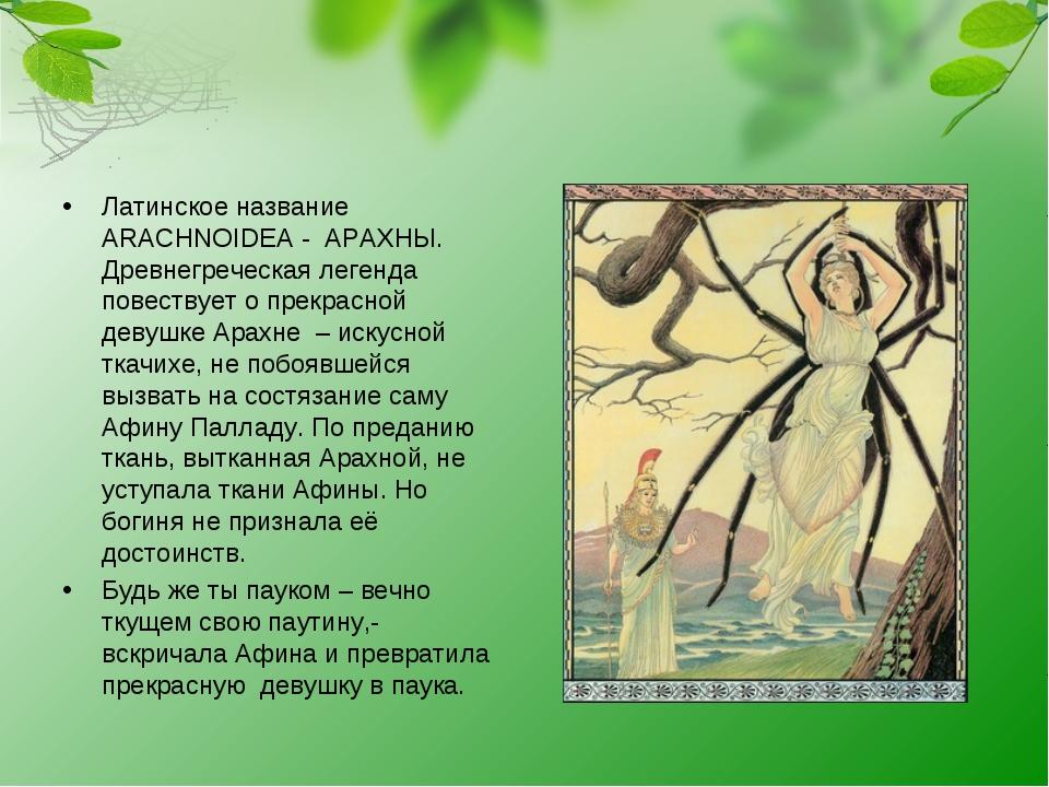 Латинское название ARACHNOIDEA - АРАХНЫ. Древнегреческая легенда повествует...