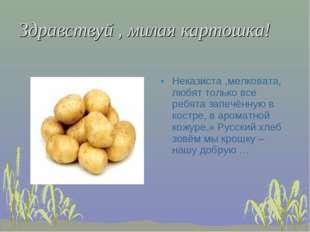 Здравствуй , милая картошка! Неказиста ,мелковата, любят только все ребята за