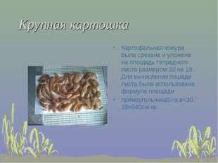 Крупная картошка Картофельная кожура была срезана и уложена на площадь тетрад