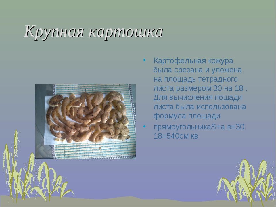 Крупная картошка Картофельная кожура была срезана и уложена на площадь тетрад...