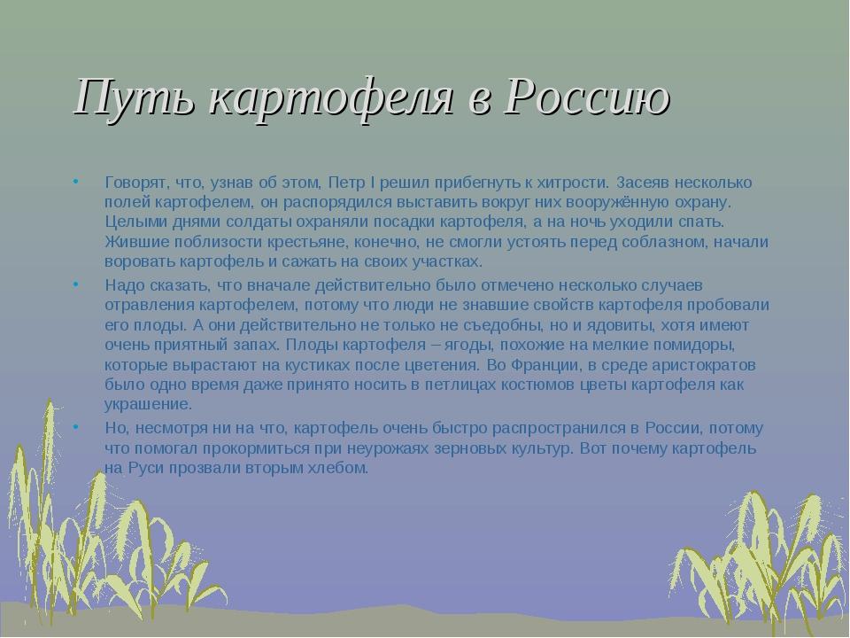 Путь картофеля в Россию Говорят, что, узнав об этом, Петр I решил прибегнуть...
