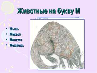Животные на букву М Мышь Махаон Мангуст Медведь