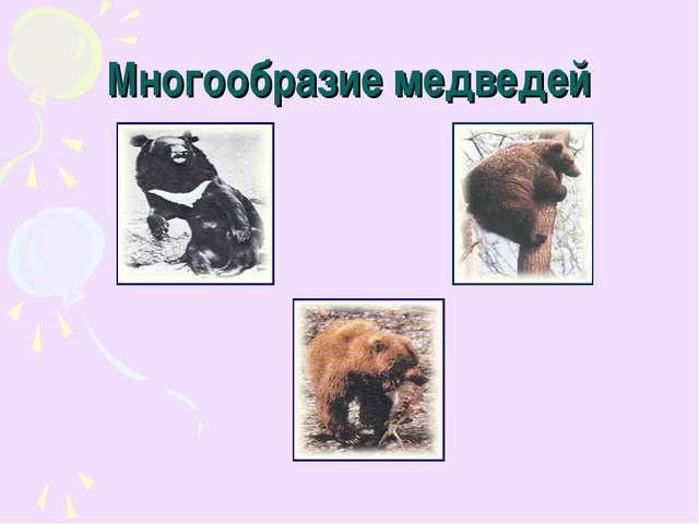 Многообразие медведей