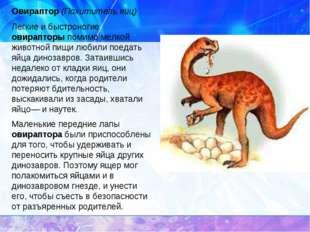 Овираптор (Похититель яиц) Легкие и быстроногие овирапторы помимо мелкой живо