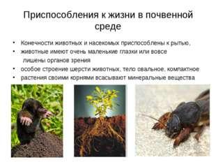 Приспособления к жизни в почвенной среде Конечности животных и насекомых прис
