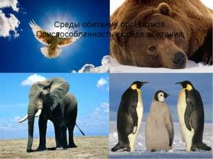 Среды обитания организмов. Приспособленность к среде обитания.