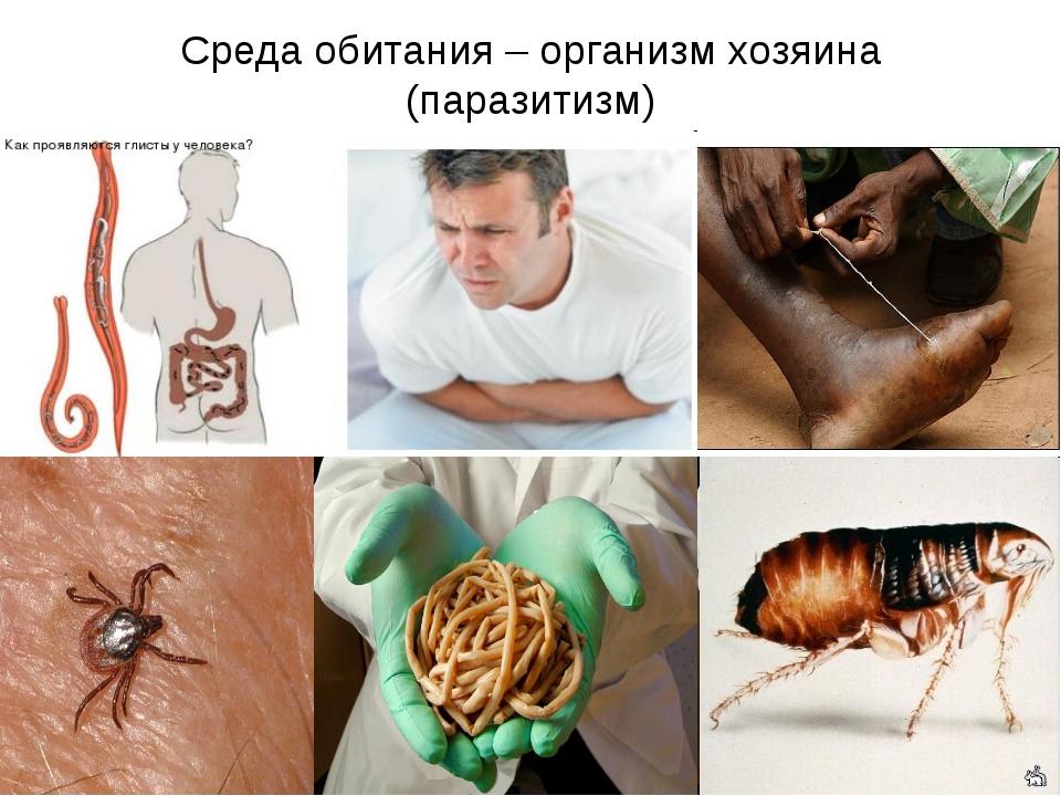 Среда обитания – организм хозяина (паразитизм)