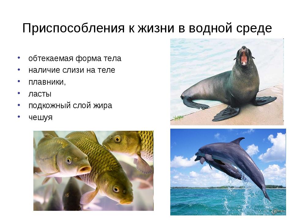 Приспособления к жизни в водной среде обтекаемая форма тела наличие слизи на...