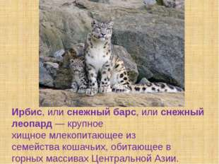 Ирбис, илиснежный барс, илиснежный леопард— крупное хищноемлекопитающее