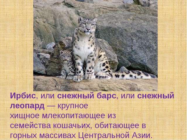 Ирбис, илиснежный барс, илиснежный леопард— крупное хищноемлекопитающее...