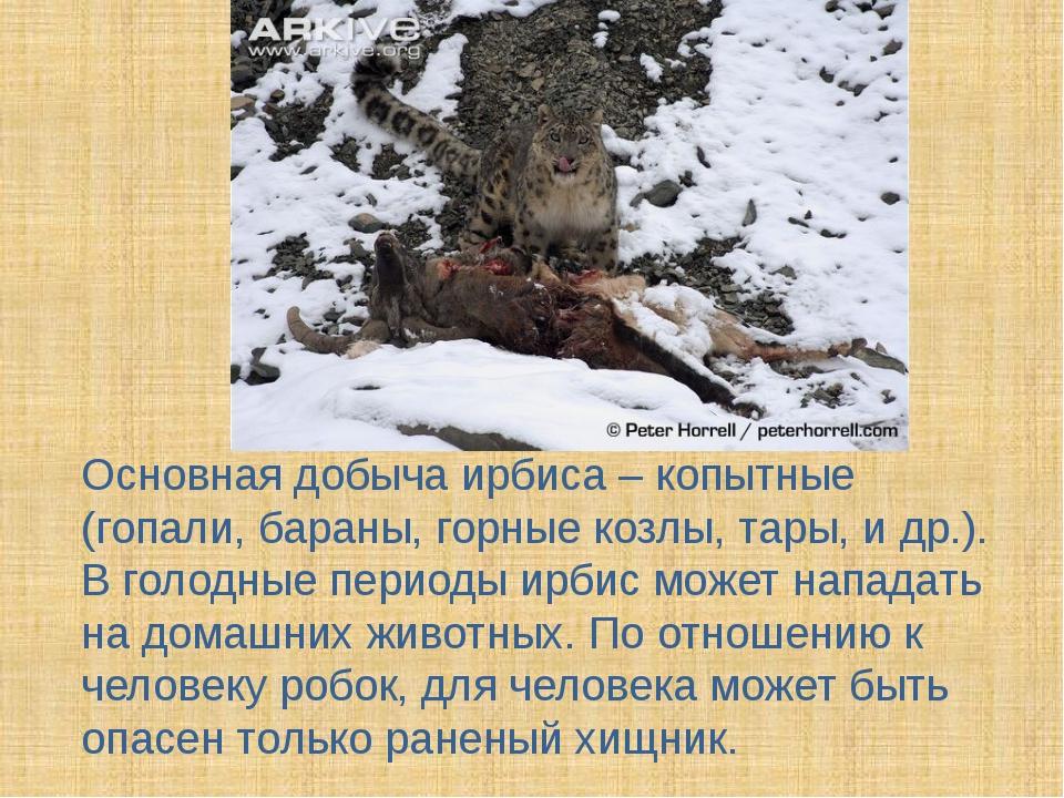 Основная добыча ирбиса – копытные (гопали, бараны, горные козлы, тары, и др....