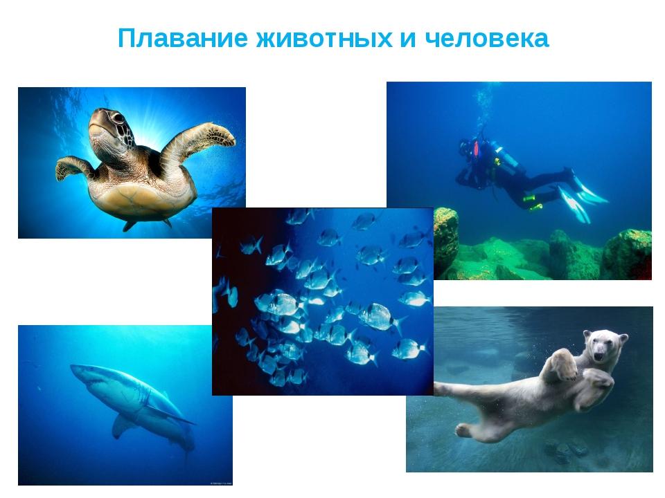 Плавание животных и человека