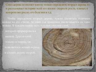 Чтобы определить возраст дерева, нужно сосчитать годичные кольца на его ство