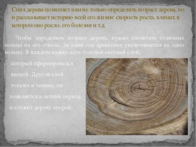 Чтобы определить возраст дерева, нужно сосчитать годичные кольца на его ство...
