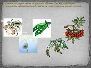 Семенам надо странствовать, отправляться в путешествие. Это позволяет им пере