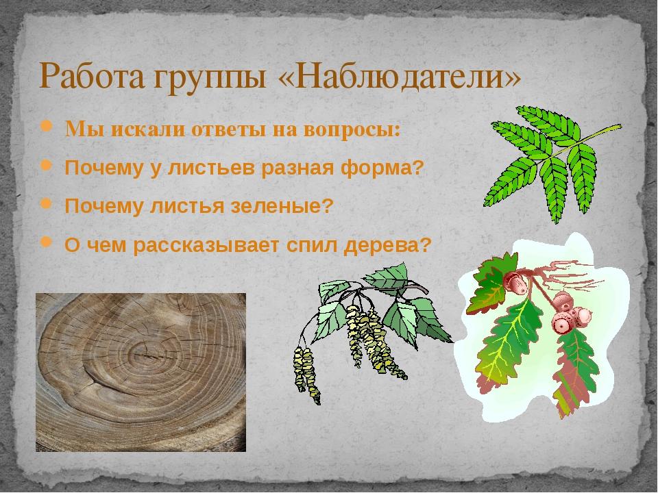 Мы искали ответы на вопросы: Почему у листьев разная форма? Почему листья зе...