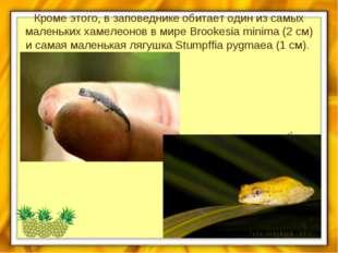 Кроме этого, в заповеднике обитает один из самых маленьких хамелеонов в мире