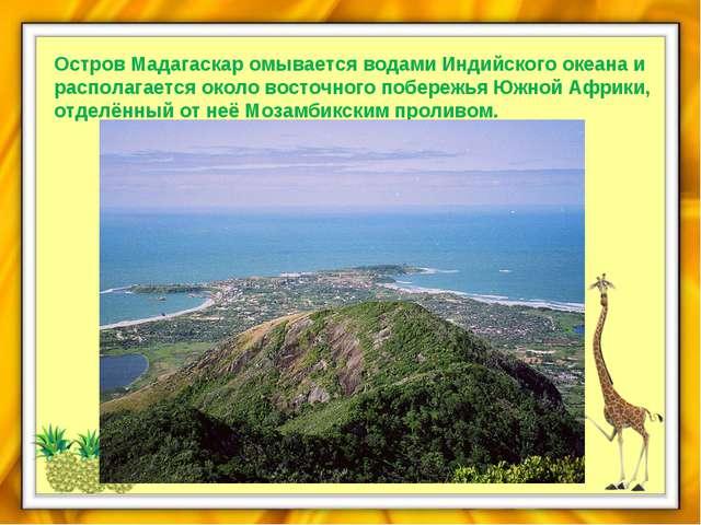 Остров Мадагаскар омывается водами Индийского океана и располагается около во...