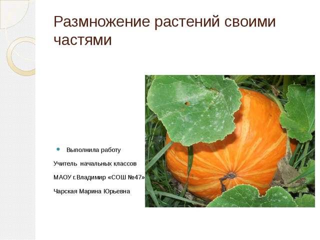 Размножение растений своими частями Выполнила работу Учитель начальных классо...